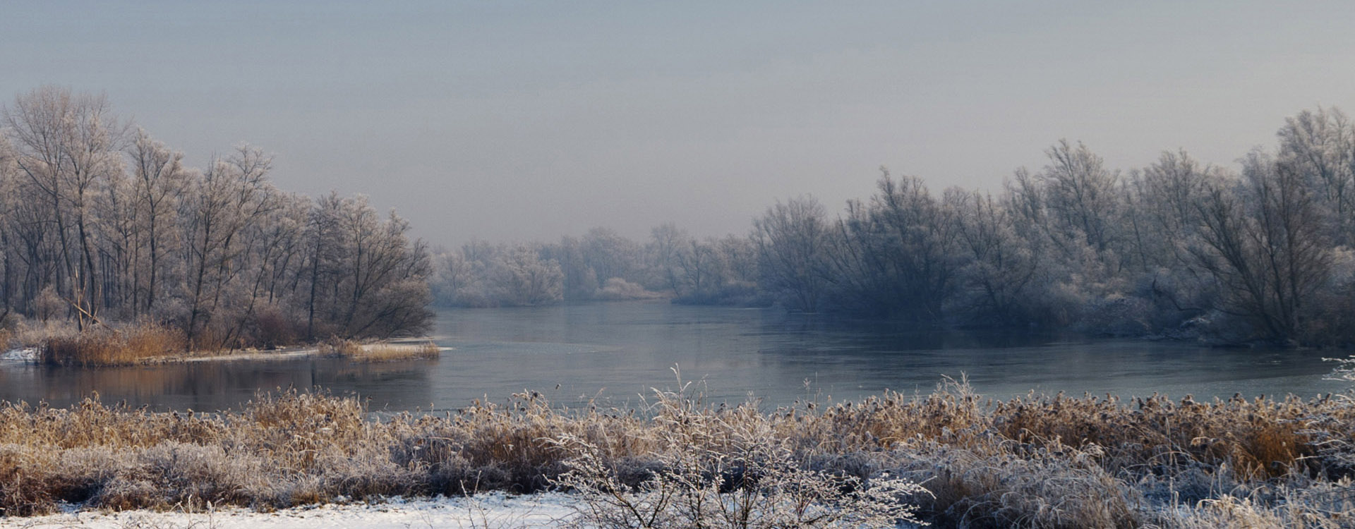 Winterlandschap panorama in de Biesbosch